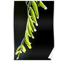 Weeping leaves 0934 Poster