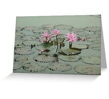 A trio of pink beauties Greeting Card