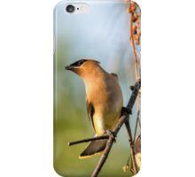 Cedar Waxwing iPhone Case/Skin