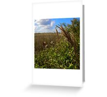 Everglades Butterfly Greeting Card