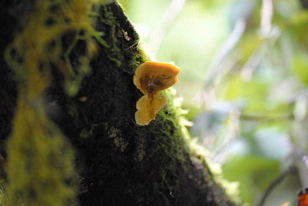 Nope, just mushroom by Katastrophuck