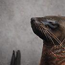 Superior seal by Katastrophuck