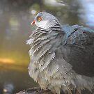 Definitely a pigeon by Katastrophuck