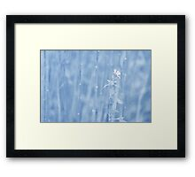 Last Bloom... Framed Print