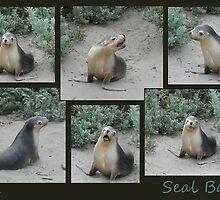 Seal Bay by Ellanita