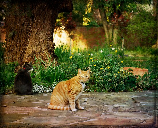 Cats in the Garden by Lynn Starner