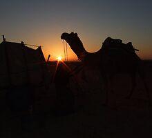 Thar Desert camel at dawn, Jaisalmer, Rajasthan, India by jphenfrey