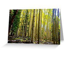 Fall in Flagstaff Greeting Card