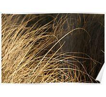 Grasses, Westgate Park Poster