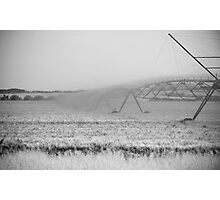 Corn Field Photographic Print