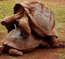 yes we do it... only , very slowly!!! by Glynn Jackson