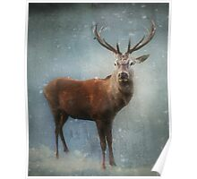 Winter Stag Poster