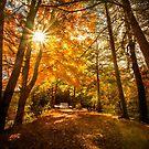 Autumn Sun  by LudaNayvelt
