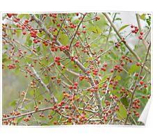 Red Fruit Evoke Holidays Poster