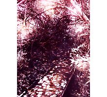 Find the path with light Photographic Print