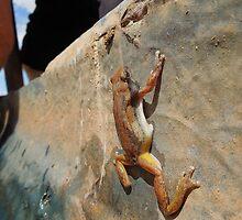 Frog in trough by Mel  LEE