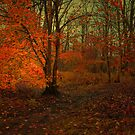 THE LAST DAYS OF AUTUMN by leonie7