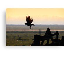 The black crow Canvas Print