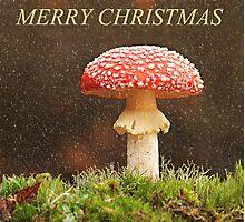 Aminita Christmas Photographic Print