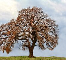 My Favorite Tree (Isolated Version) by Carolyn  Fletcher