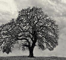 My Favorite Tree (B&W Version) by Carolyn  Fletcher