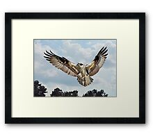 Osprey With Fish In Talons Framed Print