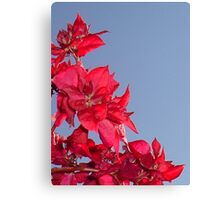 Pink Red Blooming Bougainvilleas Against A Blue Sky Canvas Print