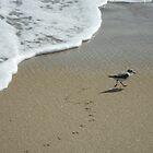 Sand Piper by Jessica Michele