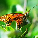 Butterfly face by Glenn Cecero