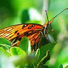 Butterfly face by glennc70000