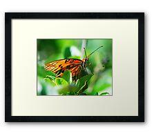 Butterfly face Framed Print