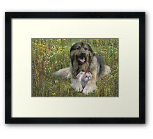 Security for you my Lady Framed Print