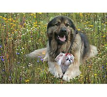 Security for you my Lady Photographic Print