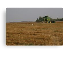 Stork in cornfield Canvas Print
