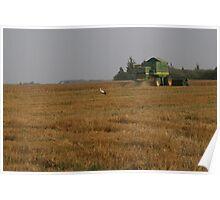 Stork in cornfield Poster