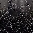 Web in the Mist by John Gaffen
