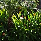 Plants in the morning sun - plantas en el sol de la mañana, Puerto Vallarta, Mexico by PtoVallartaMex
