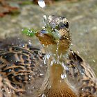 Rain Drops Keep Falling On My Head ♫♫ - Duckling - NZ by AndreaEL