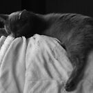 Sleep by Tracy Wazny