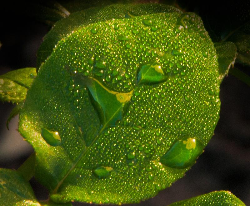 Dew  by Kelvin Hughes