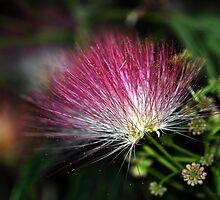 Deep Pink Flower by Katerina Vorvi
