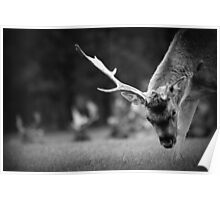 Deer with one antler Poster
