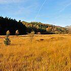 Autumn Field by thejourneysofar