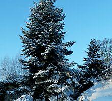 Aberdour in Winter by Steve Hammond