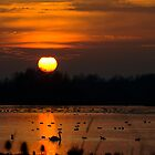 Summer Leys Sunset, Northamptonshire, UK by strangelight
