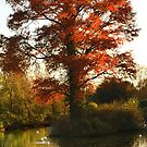 Tall Tree and Short Reflection  by Steve