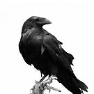 The Crow by KRDesign