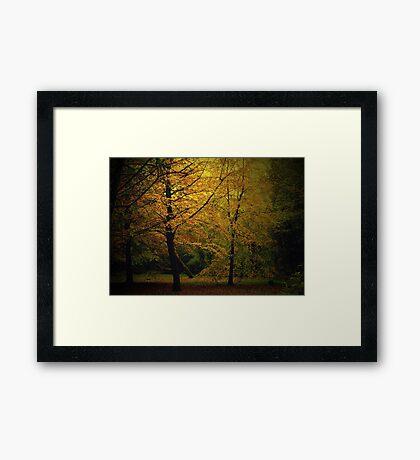 Golden Autumn Colours Framed Print