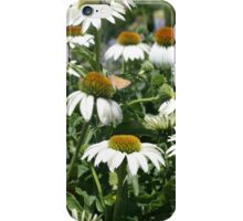 White cone flowers iPhone Case/Skin