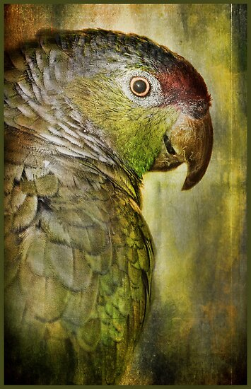 Polly Wants a What? by Barbara Manis